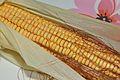 Corn Kernel - Howrah 2015-04-26 8454.JPG