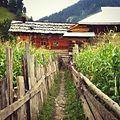 Corn fields separation in taobat.jpg
