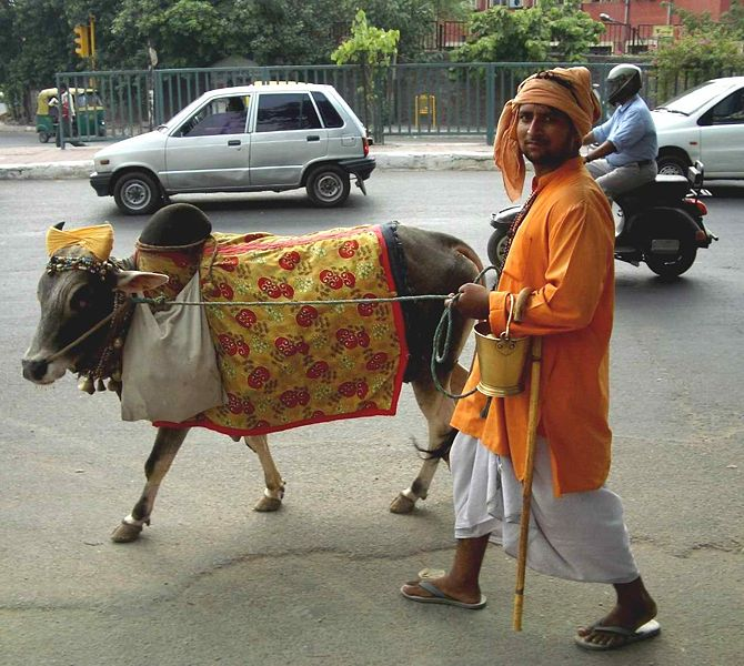 India Sacred Cow