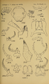 Craspedosomatidae of North America 1895 Plate XI.png