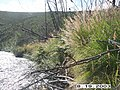 Crescent Creek Water Quality Testing, Yukon-Charley Rivers, 2003 (e326a6a1-b84d-4ad6-8677-149ad88de11d).jpg