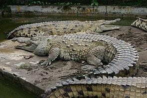 Croc inter.jpg