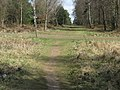 Cross roads of paths in St Leonards Forest - geograph.org.uk - 1236949.jpg