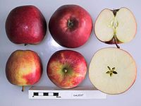 Cross section of Daliest, National Fruit Collection (acc. 1987-003).jpg