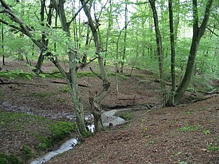 Northaw Great Wood