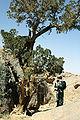 آثار الجزائر طاسيلي ناجّر