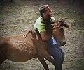 Curro das Canizadas. A Pobra do Caramiñal 6.jpg