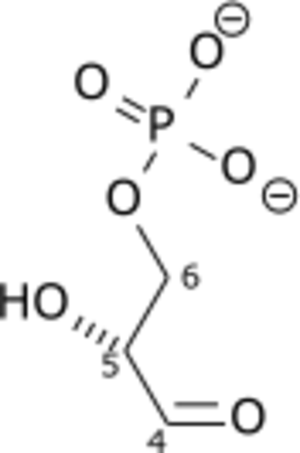 Glyceraldehyde 3-phosphate dehydrogenase