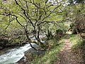 DSC06267 Fraga da Marronda, Alto Eo, Lugo, Galicia.jpg