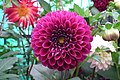 Dahlia at Lalbagh flowershow aug2011 7038.JPG