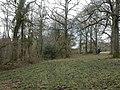 Damerham, Ashridge Copse - geograph.org.uk - 1779915.jpg