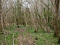 Damerham, hopper - geograph.org.uk - 1779949.jpg