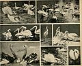 Das thierleben in Schönbrunn (1904) (20652647900).jpg