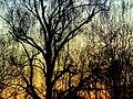 Daybreak - Flickr - Stiller Beobachter.jpg