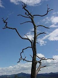 Deadtree-mj.jpg