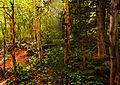 Deciduous forest (4843082944).jpg