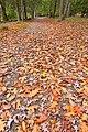 Deep Creek Autumn Path - HDR (15899694705).jpg