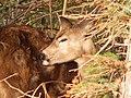 Deer Making Fur Circles.jpg