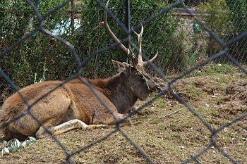 Deer taking nap in her cage.jpg