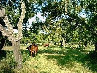 <i>Dehesa</i> multifunctional agro-sylvo-pastoral system