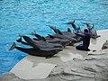 Delfini - Flickr - Roby Ferrari.jpg