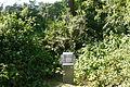 Dendrology Garden Poznan Rubus.JPG