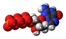 Space-filling model of the deoxyguanosine triphosphate anion