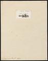 Diagramma pica - 1759 - Print - Iconographia Zoologica - Special Collections University of Amsterdam - UBA01 IZ13000176.tif