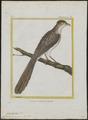 Diplopterus naevius - 1700-1880 - Print - Iconographia Zoologica - Special Collections University of Amsterdam - UBA01 IZ18800191.tif