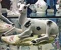 Doe 1750 55 Derby Porcelain in Derby Museum.jpg