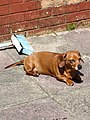 Dog in sun.jpg