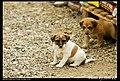 Dogs (5081438162).jpg