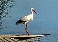 Dojran Lake 249.jpg