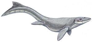 Prognathodon - Restoration of P. lutugini.