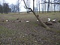 Domestic birds in Turbiv (Feb 2020).jpg