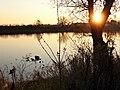 Donau bei Sonnenuntergang.jpg