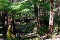 Downfall Creek (6946021826).jpg
