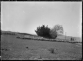 Droving sheep at the Mendip Hills sheep run. ATLIB 285707.png