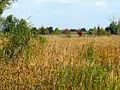 Dubechnya meadows1.JPG
