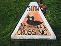 Ducks crossing - geograph.org.uk - 634016.jpg
