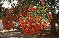 Dunst Namibia Oct 2002 slide359.jpg