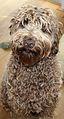 Dutch Dog Ollie.jpg