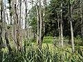 Dworczysko - panoramio (56).jpg