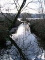 Eagle Creek at Burnaby Lake.JPG