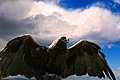 Eagle of Harhorin (in natur) - panoramio.jpg