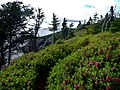 East Coast Trail (29097855677).jpg