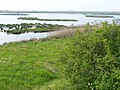 East Flood, Oare Marshes - geograph.org.uk - 421072.jpg