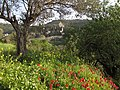 Ein Kerem in the spring - photo Ron Havilio.JPG