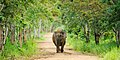 Elephant in Kui Buri national park (18979510630).jpg