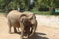 Elephant israel 2004 copy.jpg